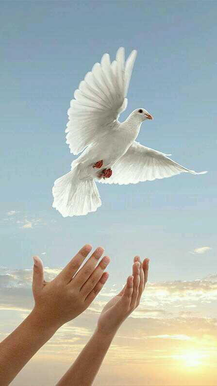 Открытку мая, открытка голубь в руках
