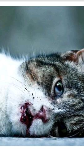 Уродливый кот стих картинка